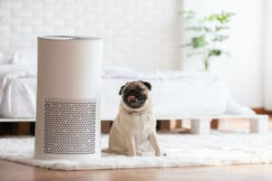 best air purifier for pet odors