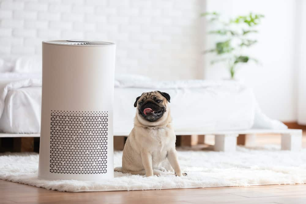 best air purifier for pets
